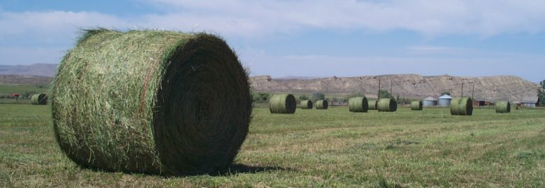 Alfalfa and Lucerne hay for sale
